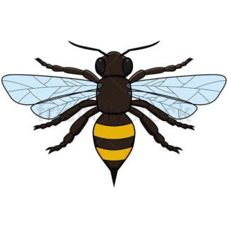 Realistic Bee Top View