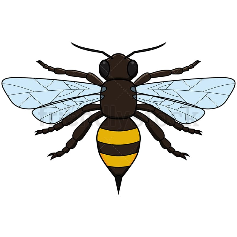 Realistic Bee Top View Vector Cartoon Clipart - FriendlyStock
