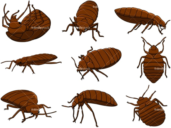 Bed bugs. PNG - JPG and vector EPS file formats (infinitely scalable). Image isolated on transparent background.