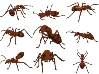 Brown ant collection. PNG - JPG and vector EPS file formats (infinitely scalable). Images isolated on transparent background.
