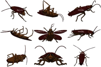 Realistic cockroaches. PNG - JPG and vector EPS file formats (infinitely scalable). Image isolated on transparent background.
