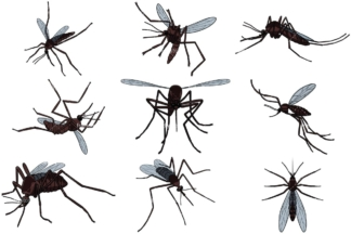 Realistic mosquitoes. PNG - JPG and vector EPS file formats (infinitely scalable). Image isolated on transparent background.