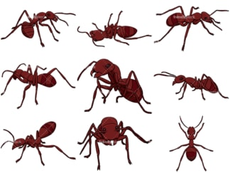 Red ant collection. PNG - JPG and vector EPS file formats (infinitely scalable). Images isolated on transparent background.
