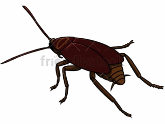 Back view cockroach. PNG - JPG and vector EPS file formats (infinitely scalable). Image isolated on transparent background.