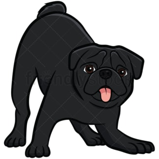 Black pug dog on alert. PNG - JPG and vector EPS file formats (infinitely scalable). Image isolated on transparent background.