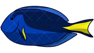 Blue tang fish. PNG - JPG and vector EPS file formats (infinitely scalable). Image isolated on transparent background.