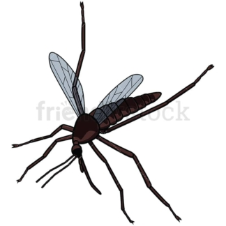 Killed mosquito . PNG - JPG and vector EPS file formats (infinitely scalable). Image isolated on transparent background.