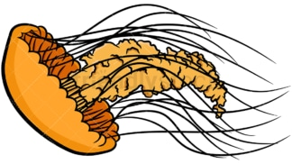 Orange jellyfish. PNG - JPG and vector EPS file formats (infinitely scalable). Image isolated on transparent background.