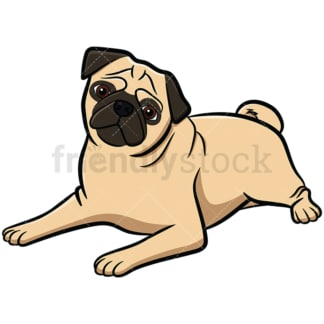 Apricot pug dog lying tilting head. PNG - JPG and vector EPS file formats (infinitely scalable). Image isolated on transparent background.