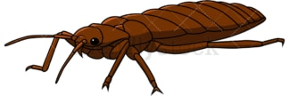Bed bug flat view. PNG - JPG and vector EPS file formats (infinitely scalable). Image isolated on transparent background.
