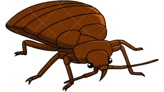 Bed bug front right view. PNG - JPG and vector EPS file formats (infinitely scalable). Image isolated on transparent background.