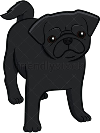 Black pug dog puppy. PNG - JPG and vector EPS file formats (infinitely scalable). Image isolated on transparent background.
