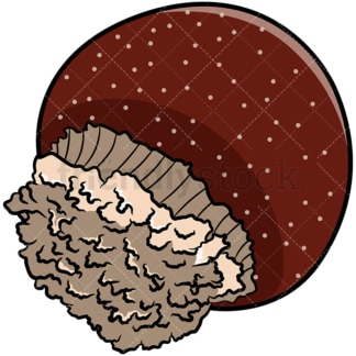 Cannonball jellyfish. PNG - JPG and vector EPS file formats (infinitely scalable). Image isolated on transparent background.