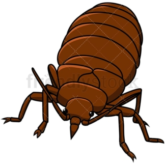 Bed bug front view. PNG - JPG and vector EPS file formats (infinitely scalable). Image isolated on transparent background.