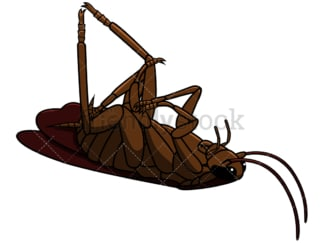 Killed cockroach. PNG - JPG and vector EPS file formats (infinitely scalable). Image isolated on transparent background.