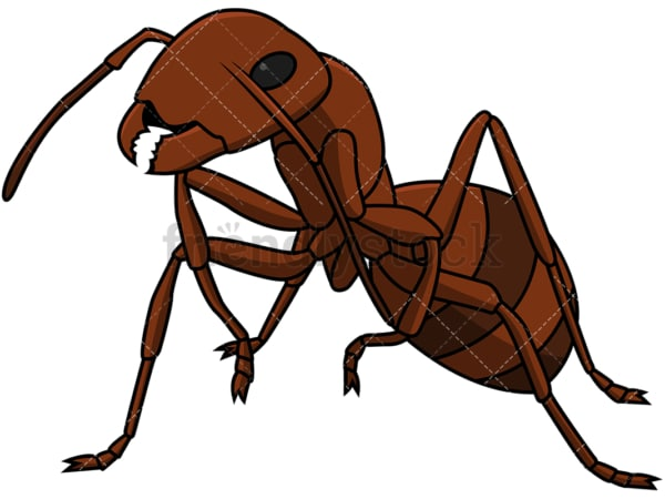Ant close-up. PNG - JPG and vector EPS file formats (infinitely scalable). Image isolated on transparent background.