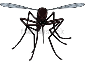 Flying mosquito front view. PNG - JPG and vector EPS file formats (infinitely scalable). Image isolated on transparent background.