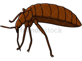 Bed bug left side view. PNG - JPG and vector EPS file formats (infinitely scalable). Image isolated on transparent background.