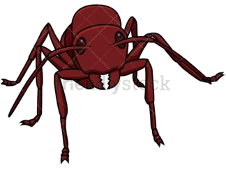 Red ant front view. PNG - JPG and vector EPS file formats (infinitely scalable). Image isolated on transparent background.