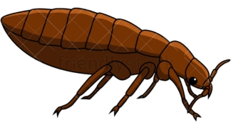 Bed bug right side view. PNG - JPG and vector EPS file formats (infinitely scalable). Image isolated on transparent background.