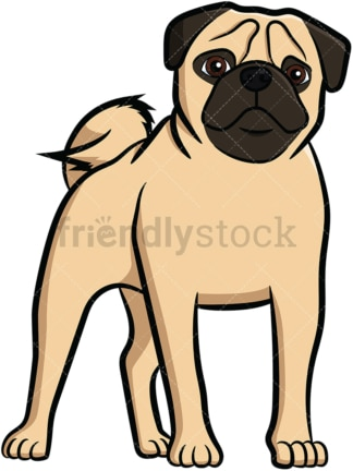 Apricot pug dog standing. PNG - JPG and vector EPS file formats (infinitely scalable). Image isolated on transparent background.