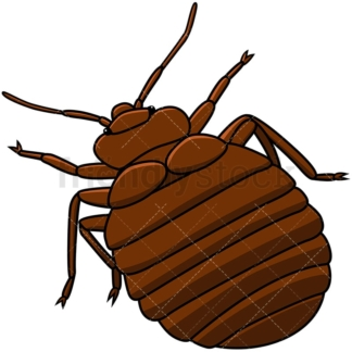 Bed bug top back view. PNG - JPG and vector EPS file formats (infinitely scalable). Image isolated on transparent background.