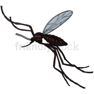 Mosquito rear view. PNG - JPG and vector EPS file formats (infinitely scalable). Image isolated on transparent background.