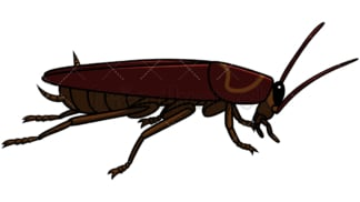 Side view cockroach. PNG - JPG and vector EPS file formats (infinitely scalable). Image isolated on transparent background.