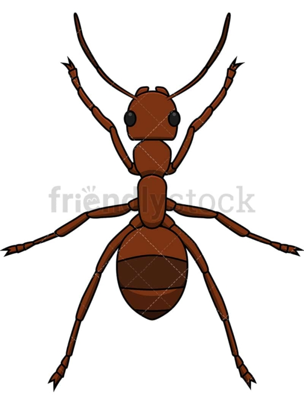 Ant top view. PNG - JPG and vector EPS file formats (infinitely scalable). Image isolated on transparent background.