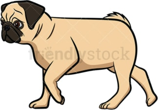 Apricot pug dog walking. PNG - JPG and vector EPS file formats (infinitely scalable). Image isolated on transparent background.