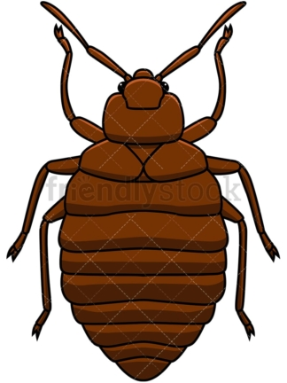 Bed bug top view. PNG - JPG and vector EPS file formats (infinitely scalable). Image isolated on transparent background.