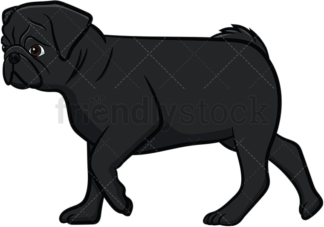 Black pug dog walking. PNG - JPG and vector EPS file formats (infinitely scalable). Image isolated on transparent background.