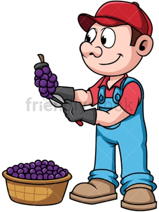 Farmer harvesting grapes. PNG - JPG and vector EPS file formats (infinitely scalable). Image isolated on transparent background.