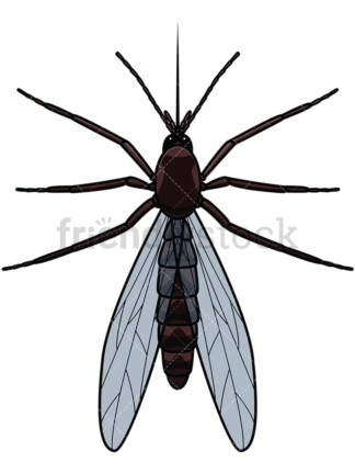 Mosquito top view. PNG - JPG and vector EPS file formats (infinitely scalable). Image isolated on transparent background.