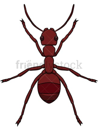 Red ant top view. PNG - JPG and vector EPS file formats (infinitely scalable). Image isolated on transparent background.