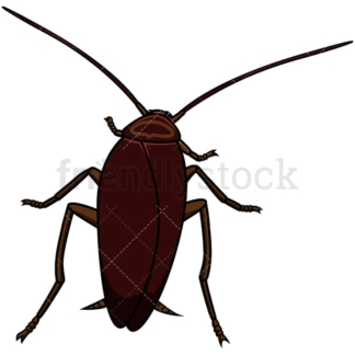 Top view cockroach. PNG - JPG and vector EPS file formats (infinitely scalable). Image isolated on transparent background.