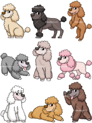 Miniature poodles. PNG - JPG and vector EPS file formats (infinitely scalable). Image isolated on transparent background.