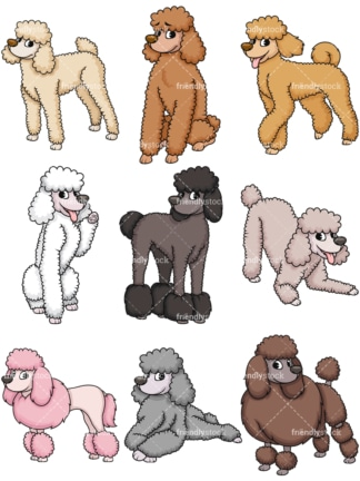 Standard poodles. PNG - JPG and vector EPS file formats (infinitely scalable). Image isolated on transparent background.