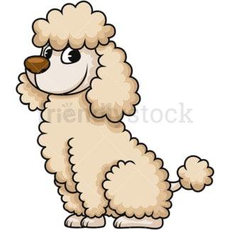 Cute miniature poodle. PNG - JPG and vector EPS (infinitely scalable). Image isolated on transparent background.