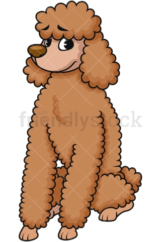Brown standard poodle sitting. PNG - JPG and vector EPS (infinitely scalable). Image isolated on transparent background.