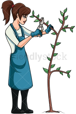 Woman pruning tree. PNG - JPG and vector EPS file formats (infinitely scalable). Image isolated on transparent background.