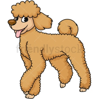 Cute brown poodle dog. PNG - JPG and vector EPS (infinitely scalable). Image isolated on transparent background.