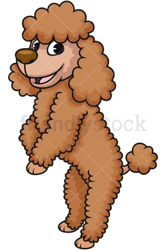 Frisky miniature poodle dog. PNG - JPG and vector EPS (infinitely scalable). Image isolated on transparent background.