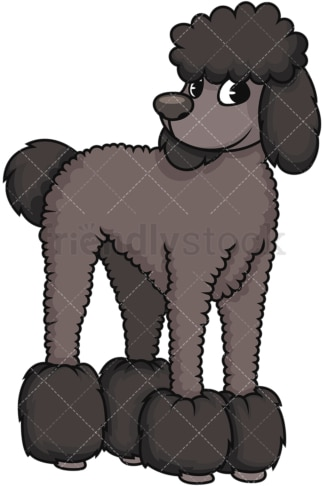 Groomed black poodle. PNG - JPG and vector EPS (infinitely scalable). Image isolated on transparent background.