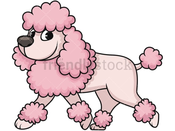 Groomed miniature poodle. PNG - JPG and vector EPS (infinitely scalable). Image isolated on transparent background.