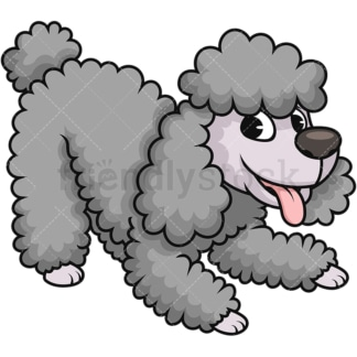 Happy miniature poodle dog. PNG - JPG and vector EPS (infinitely scalable). Image isolated on transparent background.