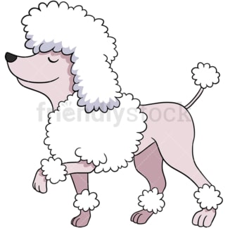 Walking poodle dog. PNG - JPG and vector EPS (infinitely scalable). Image isolated on transparent background.