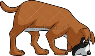 Boxer dog sniffing ground. PNG - JPG and vector EPS (infinitely scalable). Image isolated on transparent background.