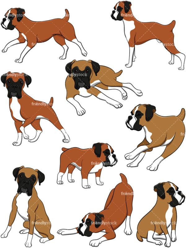 Boxer dogs. PNG - JPG and vector EPS file formats (infinitely scalable). Image isolated on transparent background.