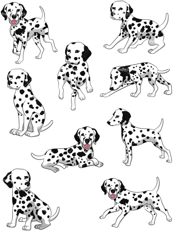 Dalmatian dogs. PNG - JPG and vector EPS file formats (infinitely scalable). Image isolated on transparent background.